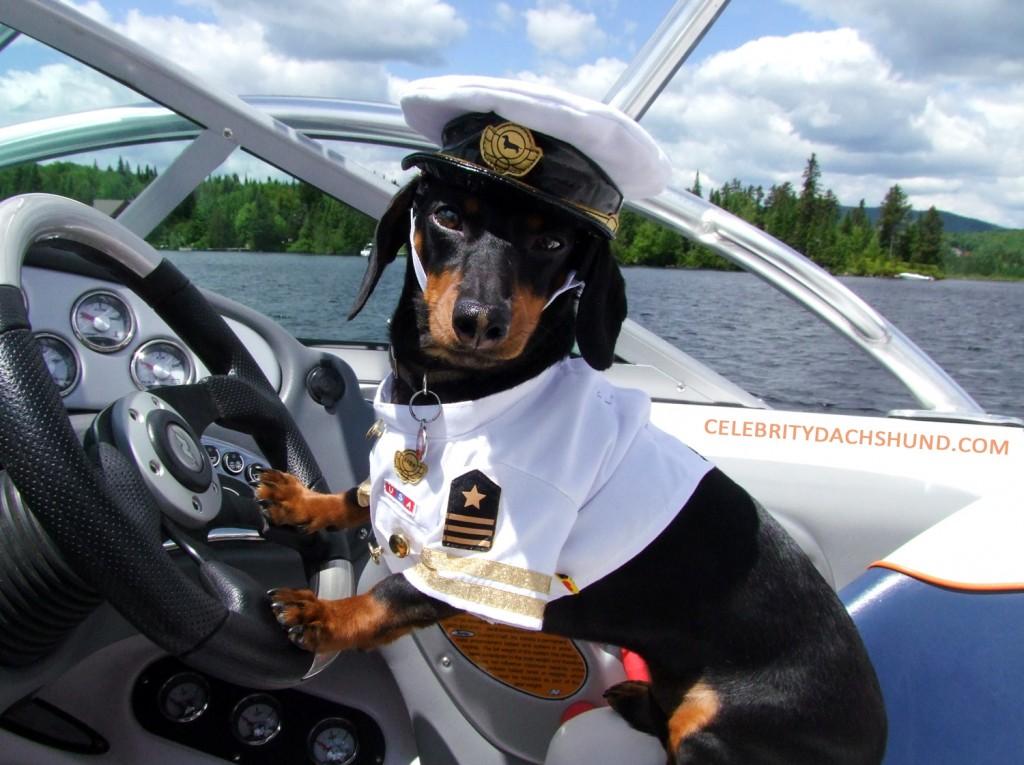 Nautica da diporto – il tuo amico a 4 zampe? potrebbe essere un ottimo marinaio!
